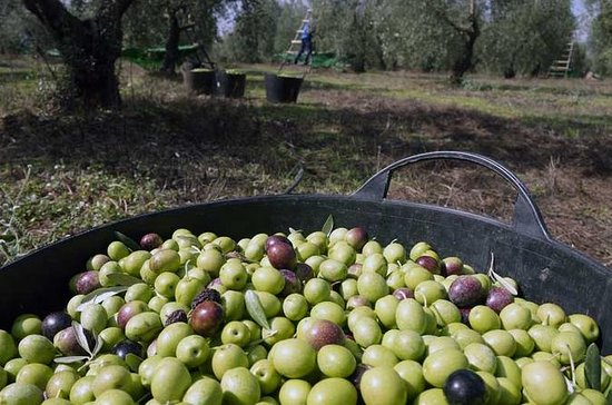 Olive Oil Farm Tour from Seville
