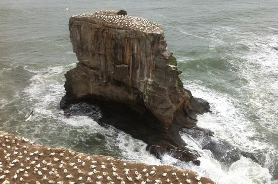 West Coast Gannet Colony and Wine Tour...