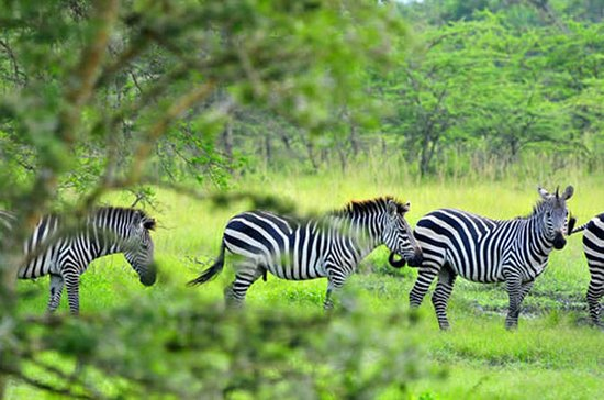 Lake Mburo National Park Guided Day...