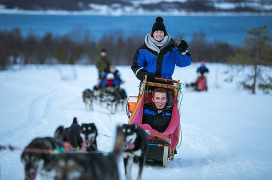 Tromso Husky Sled-Driving Tour with