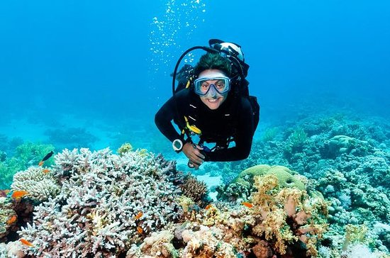 2 Tank Barrier Reef Scuba Diving em...