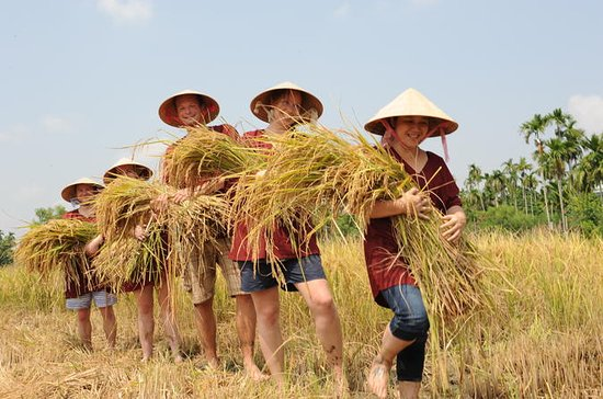Half-Day Rice Farm Day Trip