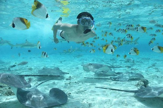 Bora Bora Snorkel Cruise with Shark...