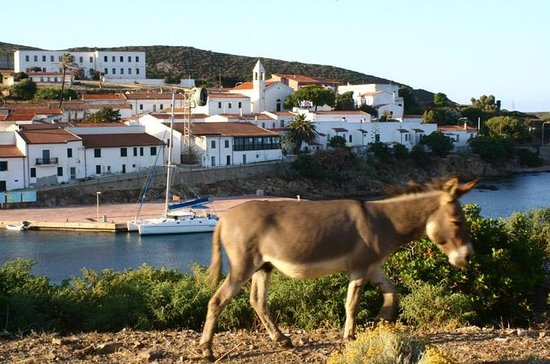 Day Tour to Asinara National Park