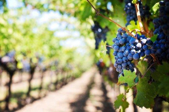 Full-Day Boutique Winery en Wine ...