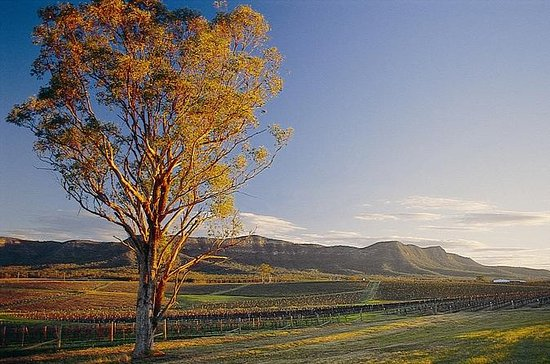 Sydney Combo: Deluxe Hunter Valley Wineries and Wilderness ...