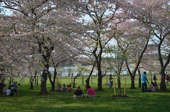 Washington DC Cherry Blossom Segway...
