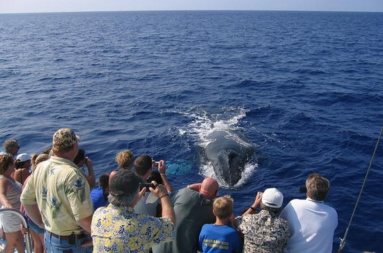 Humpback Whale Sanctuary Guided Boat ...