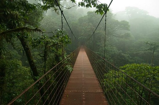 Private Full-Day Trip to Monteverde...
