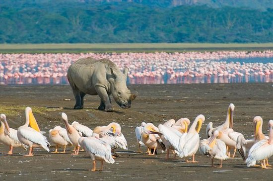 Lake Nakuru National Park: Day Trip