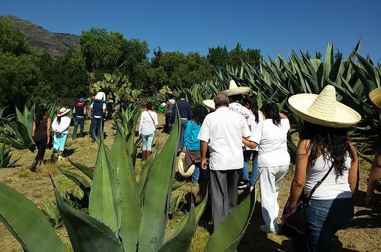 Pulque Ranch Day Trip a Tepotzotlan