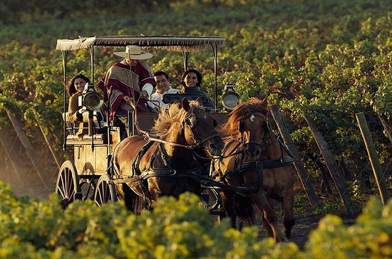 Colchagua Wine Route Tour from...