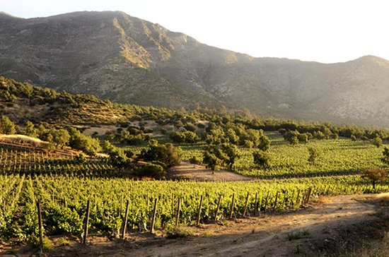 Small-Group Maipo Vineyards Full-Day...