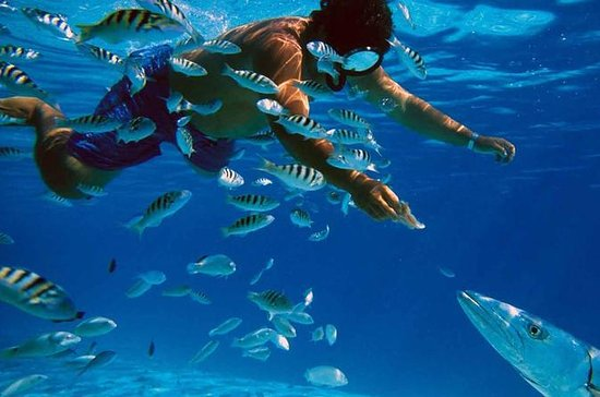 Snorkeling and Beach Club Access in...