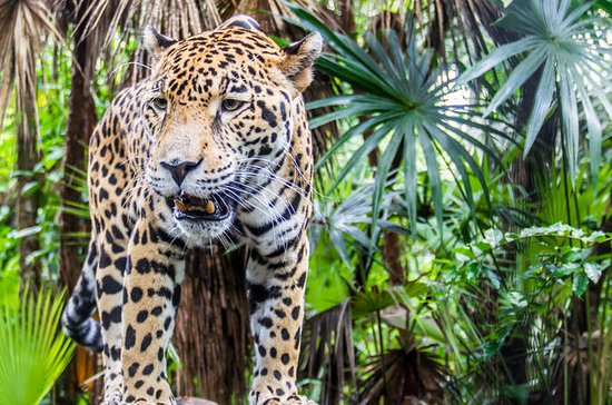 Belize Zoo and the Museum of Belize...