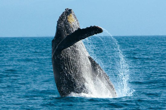 Puerto Vallarta Whale Watching Cruise...