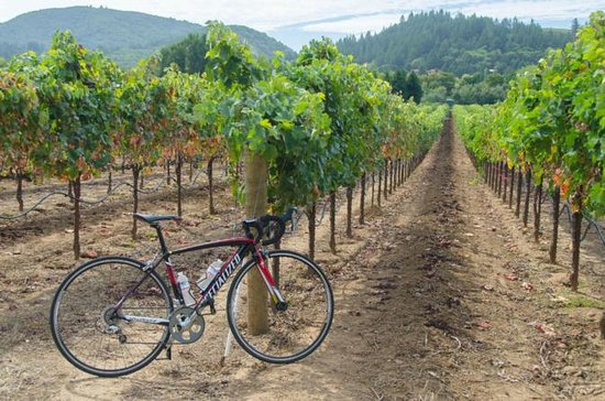Dry Creek Valley Bike and Wine Tour