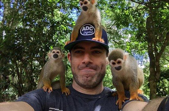 Amber Cove Shore Excursion: Monkey