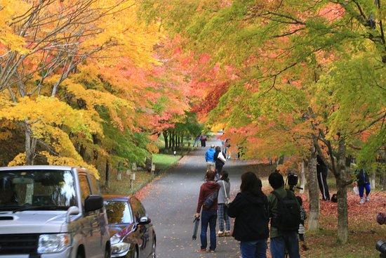Minowa-machi, Japan: もみじ湖:もみじのトンネル(末広広場)