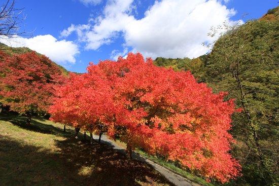Minowa-machi, Japón: もみじ湖:山の紅葉