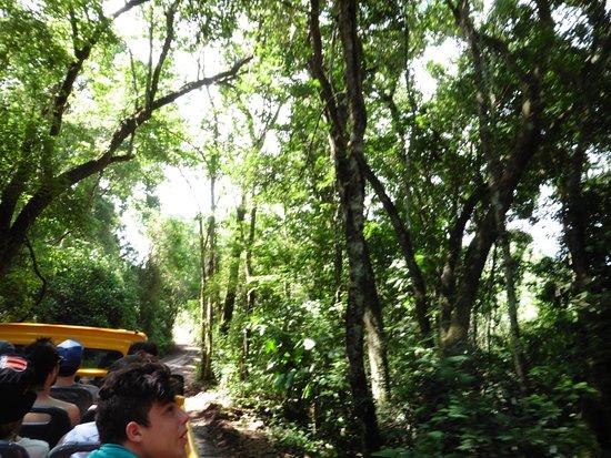Safaris 4x4 en Cataratas del Iguazú : la selva