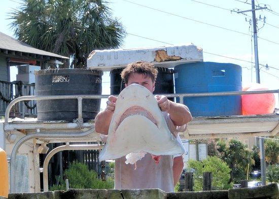 Flipper Finders Boat & Sea Kayak Tour Co. : Eeekkk....jaws!
