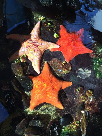 The Robert J. Lagomarsino Visitor Center at Channel Islands National Park: Starfish