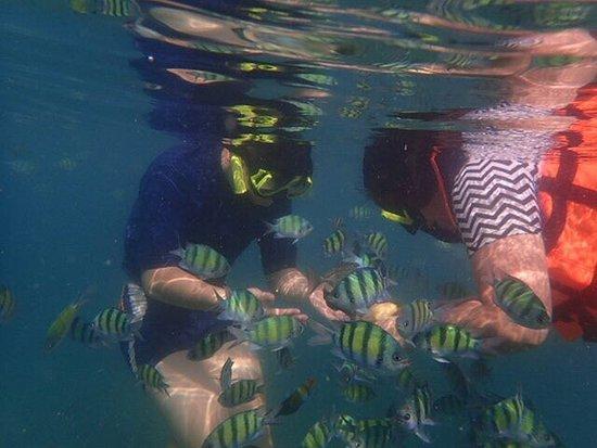 Andaman Camp and Day Cruise: photo4.jpg