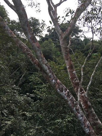 Gamboa Rainforest Resort Chunga Chagres Tour: photo1.jpg