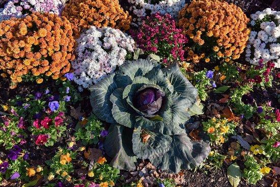 Flower Gardens at Cantigny Park