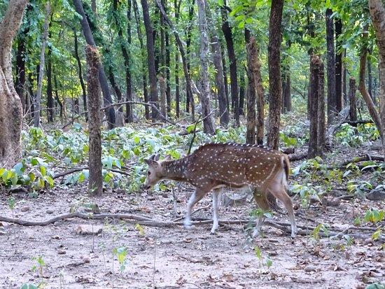 Bilde fra Mukutmanipur