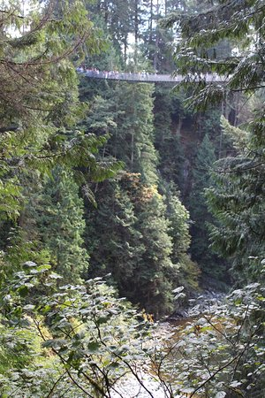 North Vancouver, Kanada: View of the suspention bridge from the back of the park