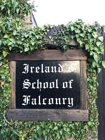 Ireland's School of Falconry: photo0.jpg