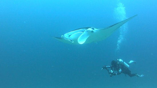 Manta Point cleaning station. 9 mantas all together when I was there- December 2016