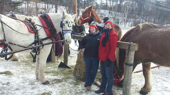 Gentle Giants Sleigh and Carriage Rides : 1225161047_large.jpg