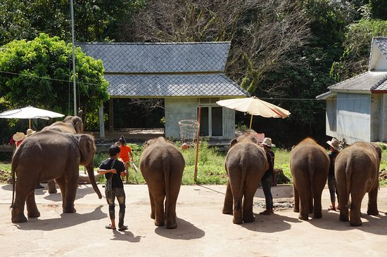 The Elephant Training Center Chiang Dao: spectacle ridicul