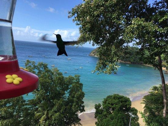 Castara, Tobago: photo3.jpg