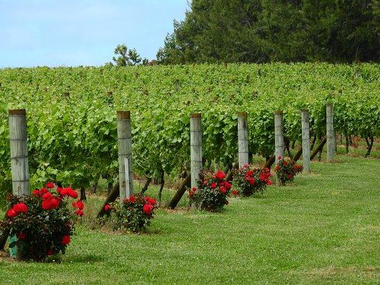 Hunua, New Zealand: wine tasting ..