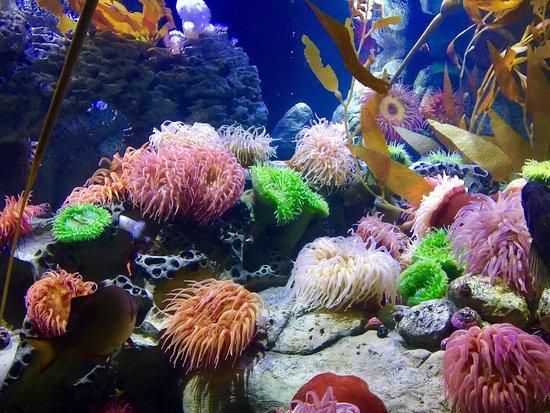 Exploration Center Aquarium Newport 2017 Ce Qu 39 Il