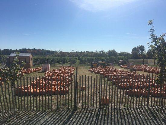 Northborough, MA: Pumpkins for sale.