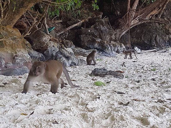 Dee Dee Beach House: La grotte a chauve-souris en entrant sur Koh Phi Phi en bateau sur la gauche et le park naturel