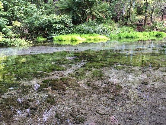 Photo of Nature Preserve Hamurana Springs Recreation Reserve at 773 Hamurana Rd, Rotorua 3072, New Zealand