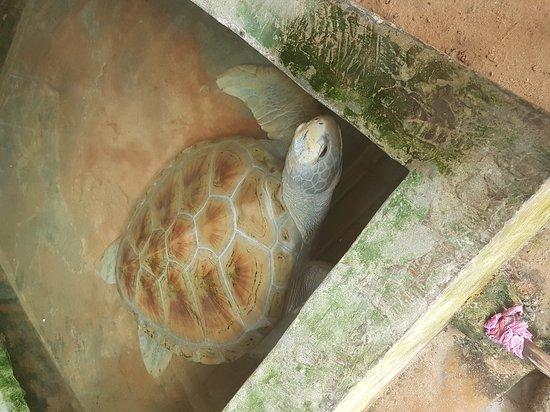 Sea Turtle Protection Association: 20161225_105217_large.jpg