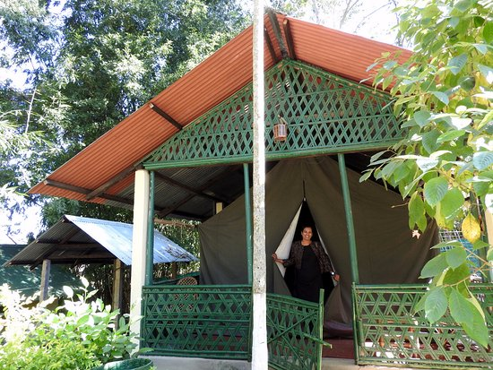 Nature Hunt Eco Camp, Kaziranga: Our tent