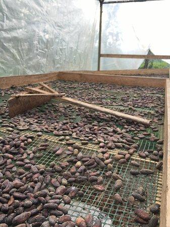 Santiago de Puriscal, Costa Rica: Drying Rack