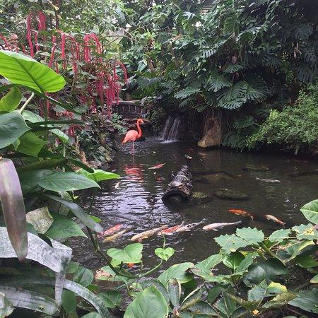 Attirant Victoria Butterfly Gardens