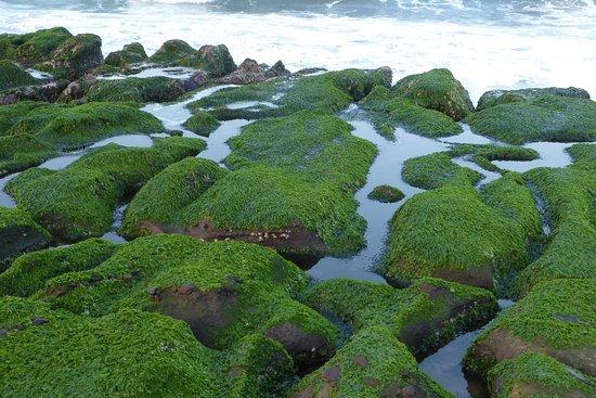 老梅绿石槽