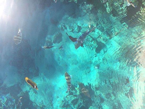 Four Seasons Resort Sharm El Sheikh: Можно наблюдать за рыбами , сидя на пирсе или плавая в маске, да и без нее. Настолько все прозра