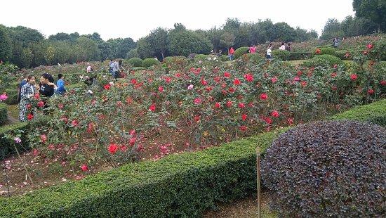 Zhongshan, Cina: 玫瑰園到處人山人海