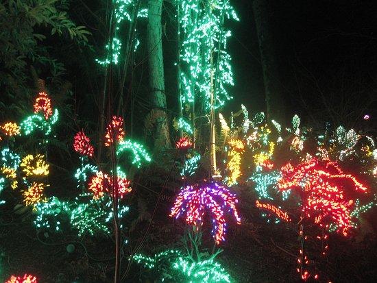 bellevue botanical garden light display - Bellevue Christmas Lights